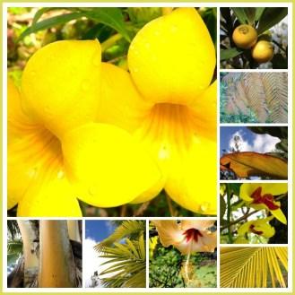 """yellow"" in Jungle"