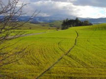 5. Sullo sfondo il Monte Amiata