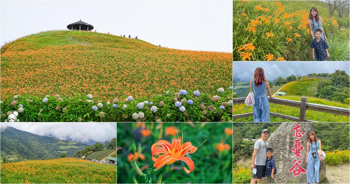 台東必追金針花季,滿山谷金針花海、雲霧飄渺之療癒景點 x 7~9月金針花季、金針花的故鄉