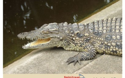 Crocodile Farm,Breeding farm for crocodiles,South Africa Safari,Safari South Africa,National Parks in South Africa;