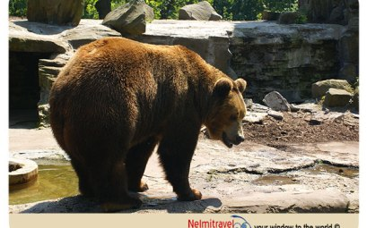 Kaliningrad Zoo; Bears Kaliningrad Zoo; Bears in Zoo Russia;