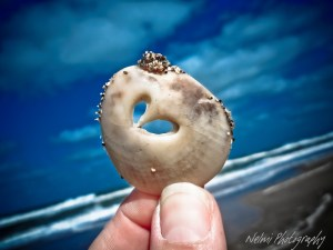 Miracles, religion and a heart shaped seashell