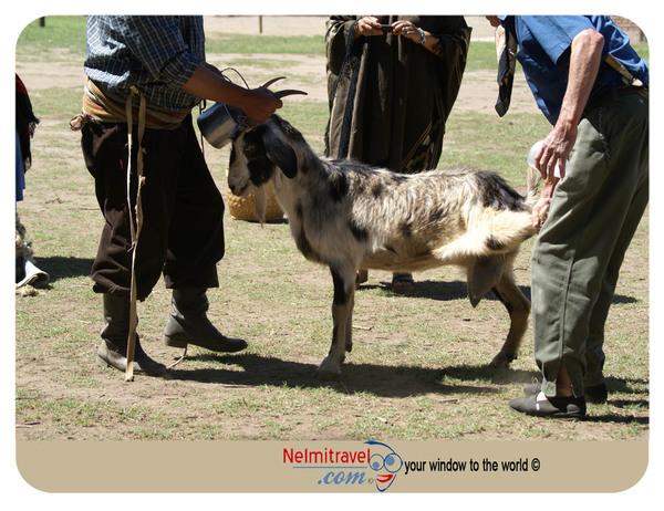 Milking a goat,Gaucho,Argentina,Milking goat breeds,gota farm,goat farming,Raising goats,Argentina farms,Gauchos Argentina