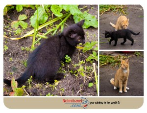 Barsik,Cat,Male Cat,Russian Cat,Kaliningrad,Cats,Orange and white cat
