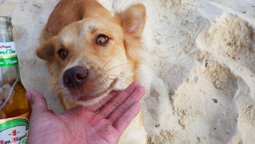 Doggie at Seven Commandos Beach