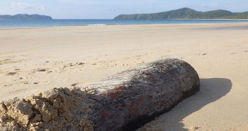 Illegal logging at Nacpan Beach