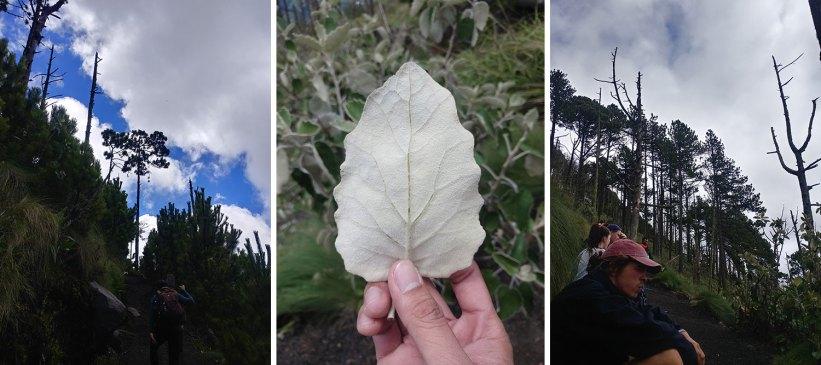 Acatenango Volcano hike