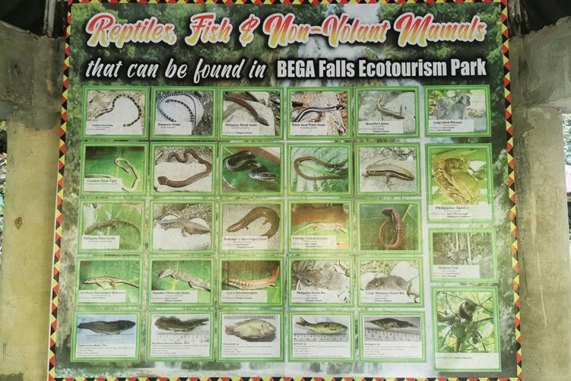 Fauna in Bega Park & Resort