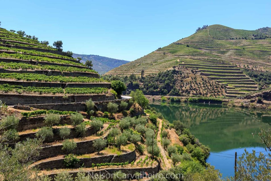 Nelson_Carvalheiro_Douro_Valley (7)