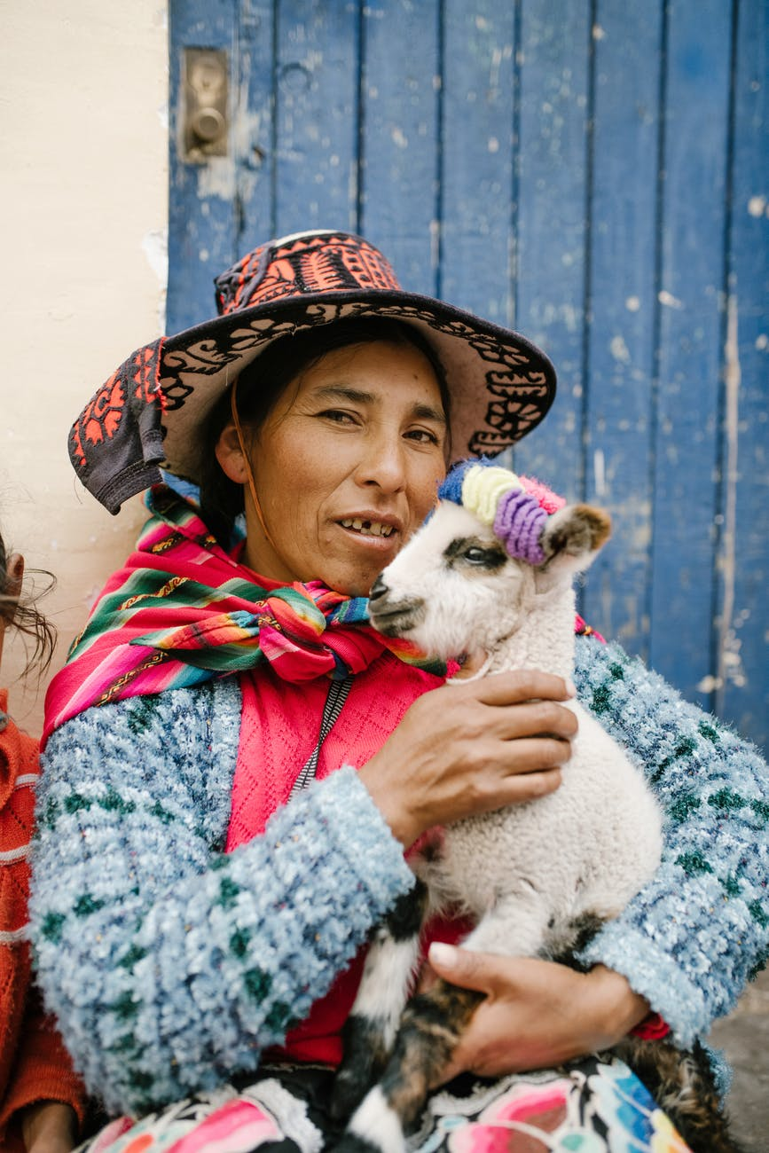 peruvian female caressing baby lama in yard of aged house