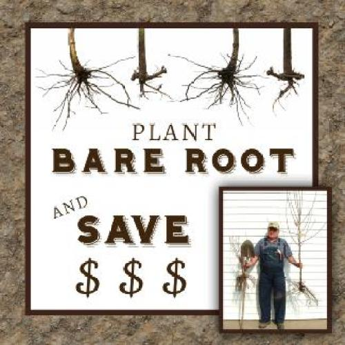 Nelson Nursery Zimmerman, MN Bare Root