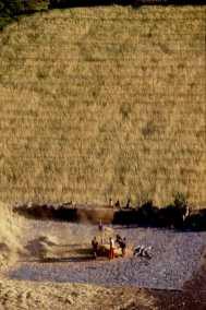 Cusco, Cosecha de trigo