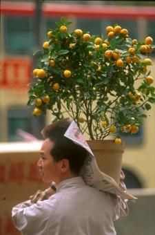 Hong Kong, Kowloon, Año del Mono, árbol