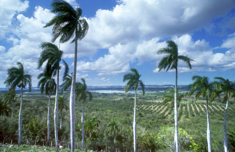 Cuba, Holguín, campos de Holguín