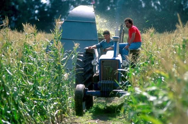 Uruguay, Dp, san José, Libertad, estancia la rabia, cosecha de maíz, trabajo
