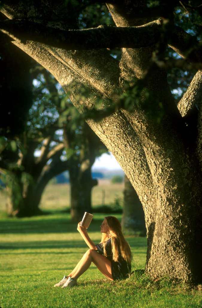 Uruguay, Dp. Mercedes, Estancia la Sirena, árbol