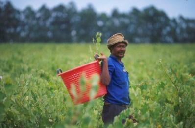 Sudáfrica, El Cabo, Stellenbosch, zona vitivinícola, agricultor, retrato