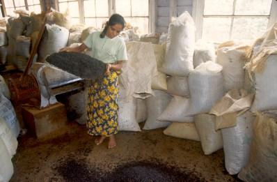 Sri Lanka, N'elya, proseso del Té, retrato