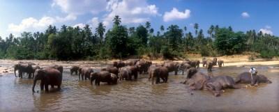 Sri Lanka, Pinnawela, Orfanato de Elefantes, , animal