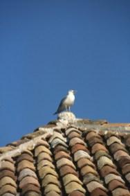 Croacia, Dubrovnik, gaviota, animal