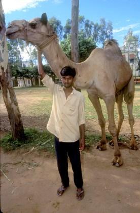 India, Mysore, Fiesta de Dussehra, Karnataka, Camello y amo., animal, retrato