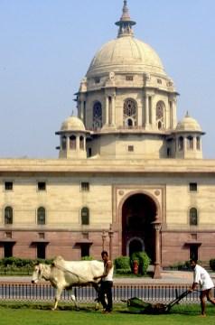 India, Uttar Pradesh, Delhi, edificio presidencial, cortando el césped, trabajo