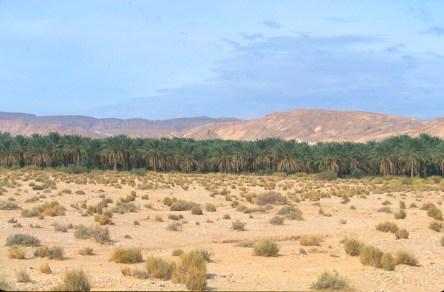 Túnez, oasis de montaña, Chebika, palmerales