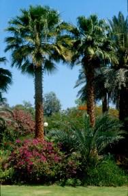 Israel, Eilat, parque Timna, Negev, jardín