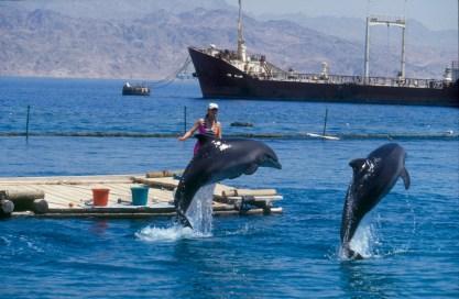 Israel, Eilat, Mar Rojo, Dolphin Reef, delfin, animal