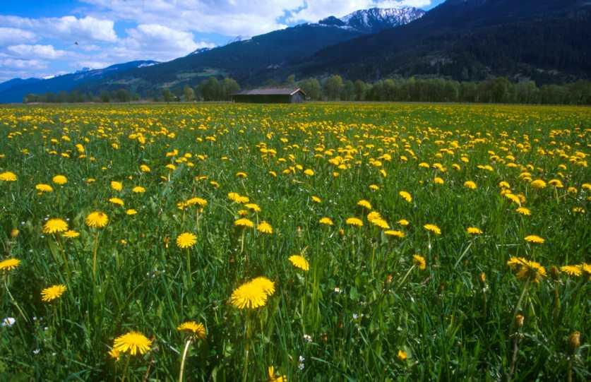 Austria, Salzburgo, Alpes