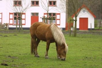 Flandes, Sant Andries, Castillo de Beisbroek, caballo, animal