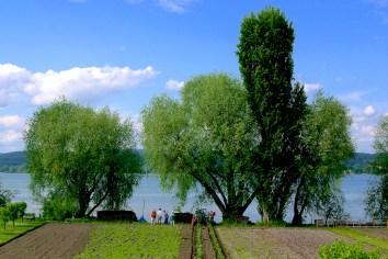 Alemania, Lago de Constanza, Isla Reichenacu