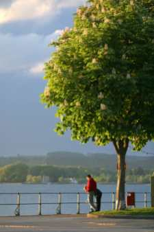 Austria, Lago de Constanza, BregenzPortugal, Alentejo, árbol
