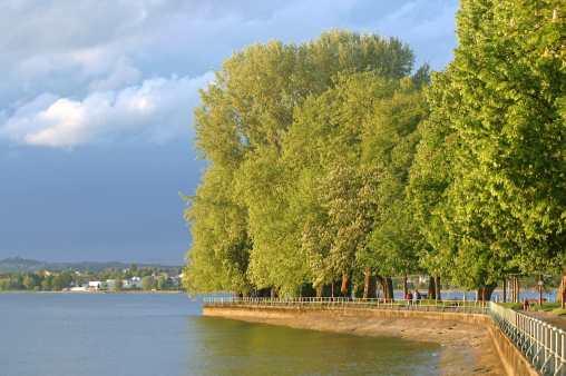 Austria, Lago de Constanza, Bregenz, árbol