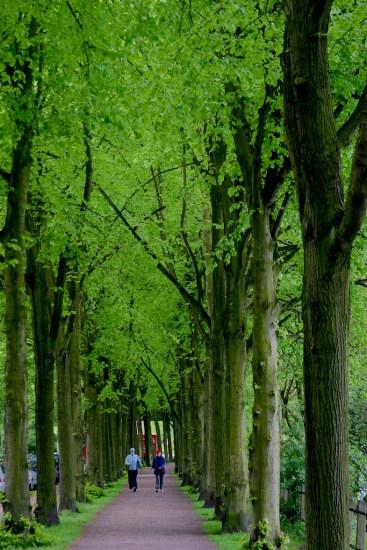 Alemania, Hamburgo Lago Aussenalster, paseo