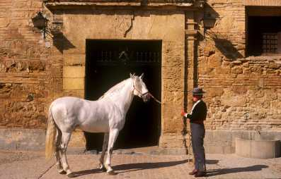 España, Cordoba, Caballerizas reales, Caballo
