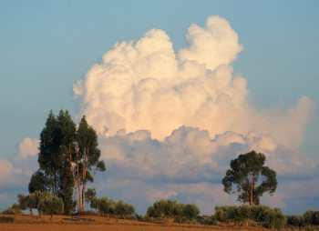 Portugal, Alentejo, árbol, nuves