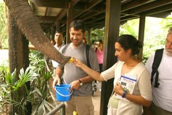 Singapur, Zoológico, alimentar al elefante, animal