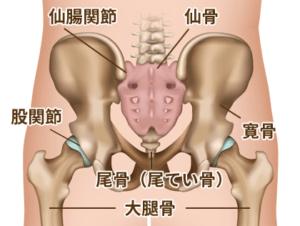 尾てい骨骨折が治るまでの経過 | Neltoku小児科學