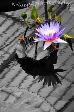 Kew image 11