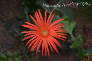 Kew image 12