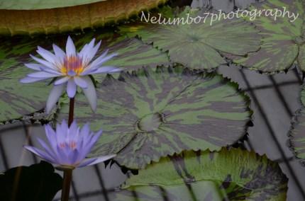 Kew image 8