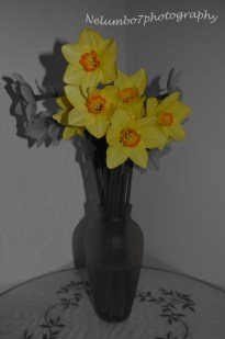 Masked daffodils