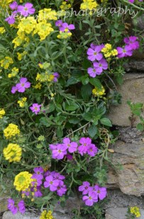 Purple and yellow wall flowers