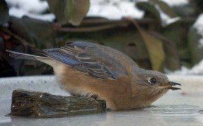 bluebird 10, PA