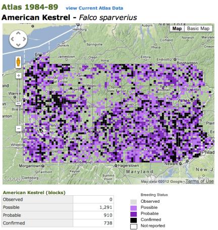 American Kestrel - Breeding Bird Atlas 1984-89