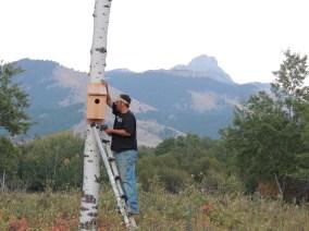 Mounting a kestrel box