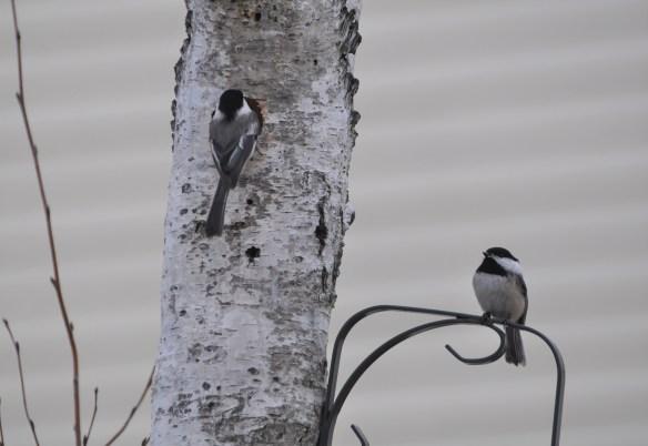 CAUTION: Birds at Work