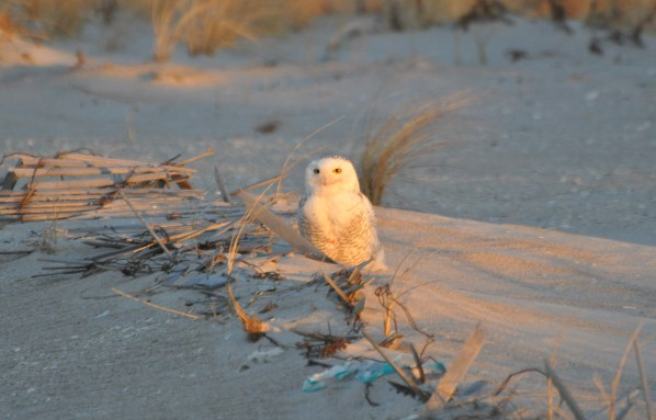 Dawn searches offer alert birds