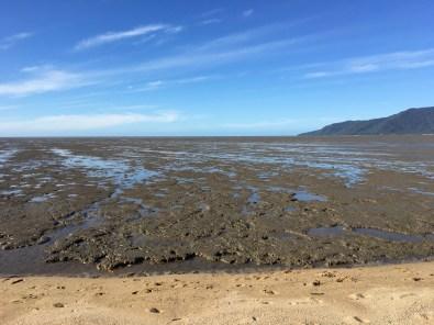 Shorebird's paradise